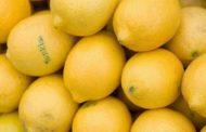 دراسة جديدة | مجرد شم رائحة الليمون، يفيد الإنسان ويساعده