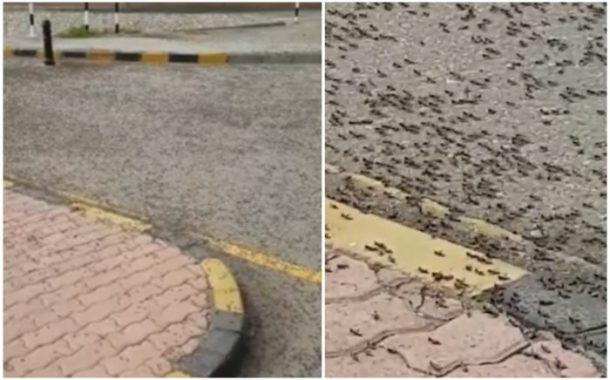 بالفيديو... النمل الأسود الكبير ينتشر بالمليارات ويدخل البيوت في سلطنة عمان